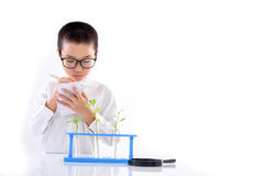 Young Asian boy check plant seedling in laboratory Stock Photos