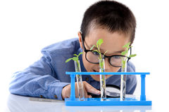 Young Asian boy check plant seedling in laboratory Royalty Free Stock Photography
