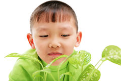 Young asian boy watching green plants grow. Studio shot of young asian boy watching green plants grow. Isolated on white. Shallow DOF. Focus on the leaves in Stock Image