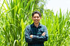 Young Asian farmer standing in Napier grass field royalty free stock image
