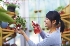 Young Asian female florist watering flower. One Young Asian Female Florist Watering Flower Royalty Free Stock Photo