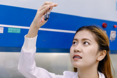 Young Asian researcher looking at the flask in the science labor Royalty Free Stock Photo