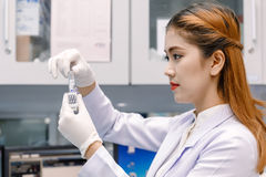 Young Asian researcher looking at the flask in the science labor Royalty Free Stock Image