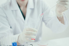 Young Asian scientist working in the lavatory with test tubes and other equipment to discover new drugs. Products and methods of formulation Royalty Free Stock Images