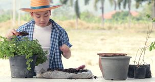 Young asian Thai boy prepare black soil to little plant on in the garden. Earth day concept stock video footage