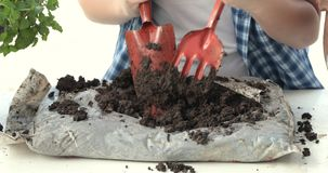 Young asian Thai boy prepare black soil to little plant on in the garden. Earth day concept stock video