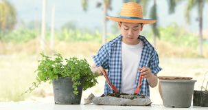 Young asian Thai boy prepare black soil to little plant on in the garden. Earth day concept stock footage