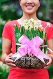 daffodil Stock Photography