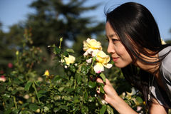 Young Asian woman smelling a flower Royalty Free Stock Images