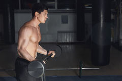 Young Athlete In The Gym Performing Biceps Curls With A Barbell. Copy space Stock Photography