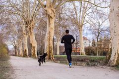 Young athlete running canicross with his border collie dog royalty free stock images