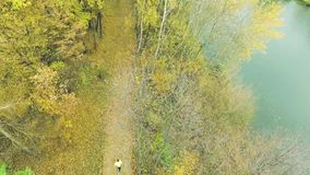 Young athlete running outside in autumn forest. Aerial view. Stock Photo