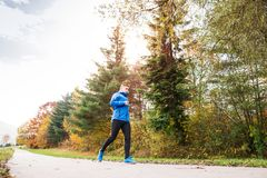 Young athlete running in park in colorful autumn nature. Young athlete in blue jacket running outside in colorful sunny autumn nature. Trail runner training for Royalty Free Stock Photo