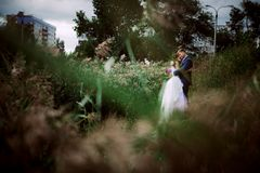 Young attractive bridal couple holding hands outdoors next to tree by lake Stock Images