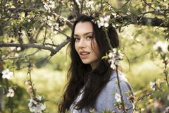 Young attractive brunette girl in blooming gardens stock images