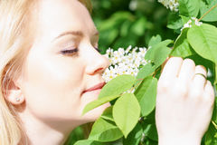 Young attractive caucasian woman in green forest with smile is sniffing blossom of bird-cherry, holding it by hands at sunny day royalty free stock images