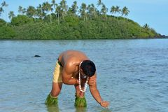 Young attractive and exotic Polynesian Cook Islander man bathing. In water in Muri lagoon in Rarotonga, Cook Islands. Real people. Copy space stock photos