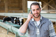 Young attractive farmer in a barn with calf on the background Royalty Free Stock Images