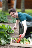 Young attractive farmer harvesting vegetables Royalty Free Stock Image