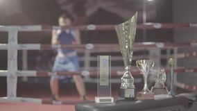 Young attractive fighter boxer male athlete training workout practice punch hook kick with prizes on boxing ring. Young attractive fighter male boxer athlete stock footage