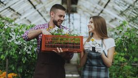 Young attractive florists couple in apron working in greenhouse. Cheerful man with box of flowers talking woman loosen. Young attractive florists couple in apron Stock Photos