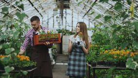 Young attractive florists couple in apron working in greenhouse. Cheerful man with box of flowers talking woman loosen. Young attractive florists couple in apron Stock Photo