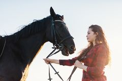 Young attractive girl holding a bay horse on a harness. Royalty Free Stock Photography