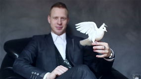 Young attractive illusionist in black suit with white pigeon on his hand. White pigeon sitting on the arm of a man and waving wings. Slow motion stock video footage