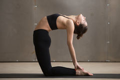 Young attractive sporty woman in Camel pose, grey studio backgro Stock Image