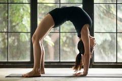Young attractive woman in Bridge pose, studio background. Young attractive woman practicing yoga at home, model stretching in Urdhva Dhanurasana exercise, Bridge Stock Photo