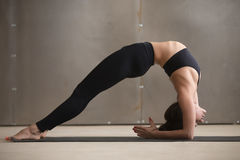 Young attractive woman in Elbow Bridge pose, grey studio backgro. Young attractive yogi woman practicing yoga, stretching in Elbow Bridge exercise, Dvi Pada Stock Photography