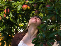 Young attractive woman enjoy apples Stock Photo