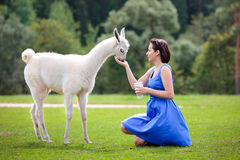 Young attractive woman feeding baby lama Royalty Free Stock Images