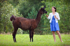 Young attractive woman feeding a brown lama Royalty Free Stock Photo