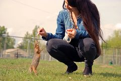 Young attractive woman feeding a hungry gopher bread. Young attractive woman feeding a hungry gopher royalty free stock photography