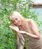 The young attractive woman in a hothouse rejoices to the future crop of tomatoes Stock Photos