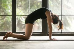 Free Young Attractive Woman In Cat, Marjaryasana Pose, Window Backgro Royalty Free Stock Photo - 101078495