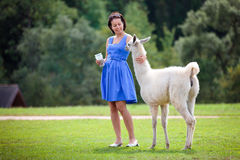 Young attractive woman playing with baby lama Royalty Free Stock Image