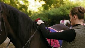 Young attractive woman preparing dark brown horse for a dressage ride training. Woman placing a pad blanket and saddle. Gently on horse`s back stock footage