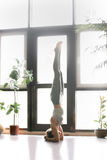 Young attractive woman in salamba sirsasana pose, home interior. Young woman practicing yoga near plants, floor window, standing in headstand exercise, salamba Royalty Free Stock Photography
