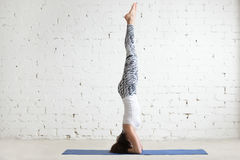 Young attractive woman in salamba sirsasana pose, white studio b. Young attractive woman practicing yoga, standing in salamba sirsasana exercise, headstand pose Stock Images