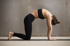 Young attractive woman standing in Marjaryasana pose, grey studi Royalty Free Stock Photography