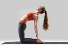 Young attractive woman stretching in Ustrasana pose, grey studio Stock Photos