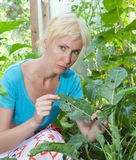 Woman is upset - caterpillars eat leaves of plants Royalty Free Stock Image