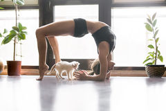 Young attractive woman in Urdhva Dhanurasana pose, home and cat Royalty Free Stock Photo