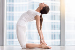 Young attractive woman in Ustrasana pose against floor window Stock Photos