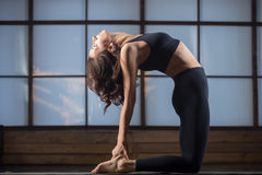 Young attractive woman in the Ustrasana pose, studio evening pra Royalty Free Stock Photo