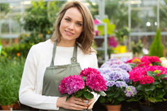Young attractive woman working at the plants nursery Stock Photography