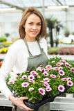 Young attractive woman working at the plants nursery Royalty Free Stock Photo