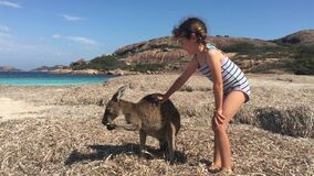 Young australian girl plays with kangaroos in Lucky Bay Western Australia